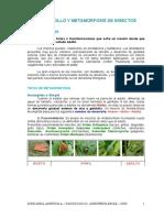 Metamorfosis 2013.pdf