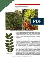 Caesalpinia_spinosa_septiembre.pdf