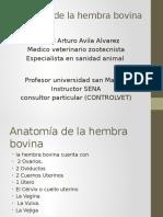 Anatomía de La Hembra Bovina