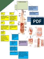 gene aparato digestivo.docx