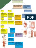 Gene Aparato Digestivo