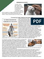 0- El Ronroneo de Los Gatos, Beneficioso Para Nuestra Salud