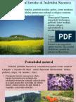 Potentialul Turistic in Suceava