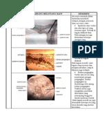 Daun (laporan praktikum daun) deskripsi & pembahasan daun