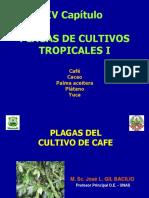 Plagas de Café I-2010.pdf