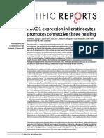 Keratinocitos Promueve La Cicatrizacion de Tejido Conectivo