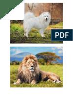 Animales Con Plumas, Pelos y Escamas