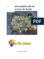 Common Marine Life Gulf of Maine