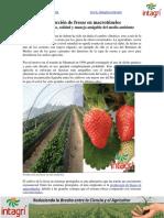 01. Produccion de Fresas en Macrotuneles