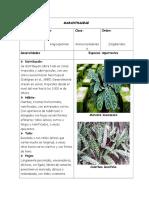 Ficha Técnica Familia Maranthaceae