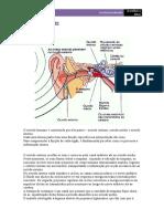 ouvido.pdf