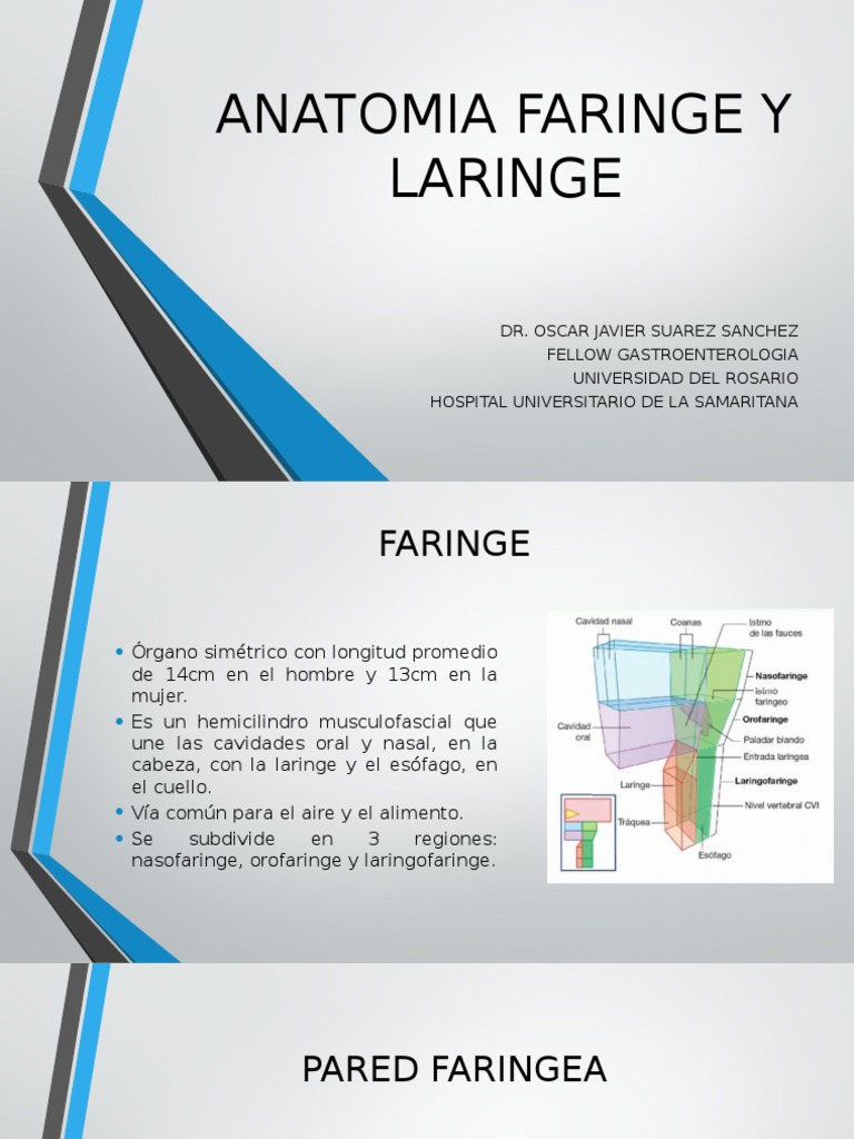 Anatomia Faringe y Laringe Ppt