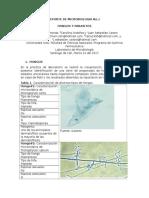 REPORTE DE MICROBIOLOGIA No.1.docx