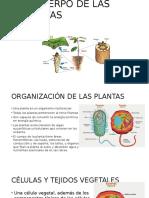 El Cuerpo de Las Plantas El Tallo