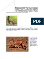 Fauna Zona Central