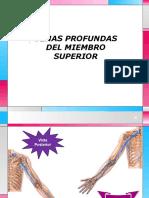 VENAS-PROFUNDAS-DEL-MIEMBRO-SUPERIOR.pptx