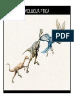 Zoologija-7.2 Predavanje 2010 Evolucija Ptica
