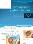 Orbita, via lagrimal y globo ocular    odontologia.pdf