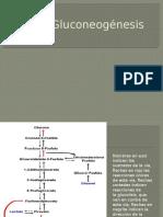 Gluconeogénesis1.pptx