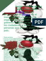 La Contitucion Mexicana