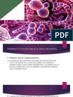 microbiologia Celula procariota