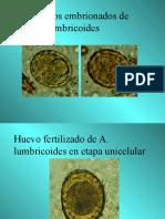Atlas a Color de Parasitologia[1]