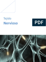 3 Tejido Nervioso
