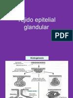 Tejido Epitelial Glandular Curso de Histología