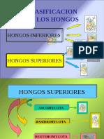 (Lab) Ascomycota (_)