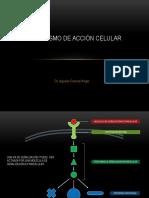 Mecanismo de acción celular.pdf