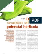 caigua_horticola (2).pdf