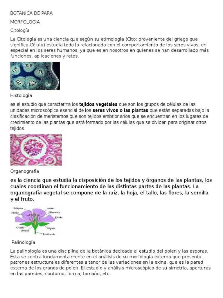 Botanica de