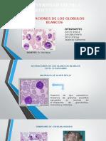 Alteraciones Globulos Blancos en El Citoplasma