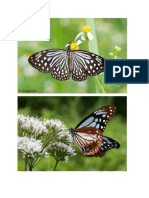 5 Butterflies Photos.docx