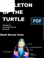 Skeleton of the Turtle