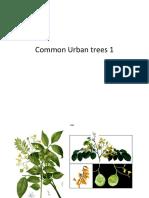 Common Trees1.Pptx