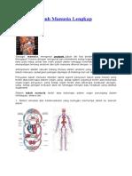 Anatomi Tubuh Manusia Lengkap