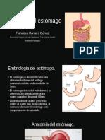 Histología Del Estómago