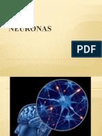 Neuronas (1)