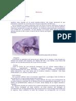 Medicina Cuatro Anatomia de La Mastoides