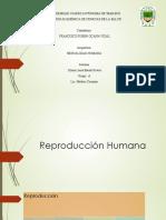 Reproducción Humana