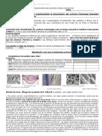 Copie de [Template] Copie de C8A1_Plante - TS5 EL AZZOUZI Amine