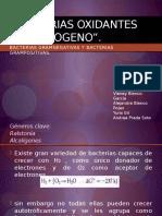 bacterias gram.pptx