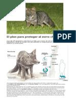 El Plan Para Proteger Al Zorro Chilote