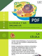 LA CELULA Y SUS ORGANELOS (1).pptx
