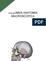 Resumen Anatomia Macroscopica