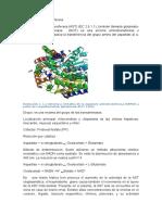 Aspartato-aminotransferasa