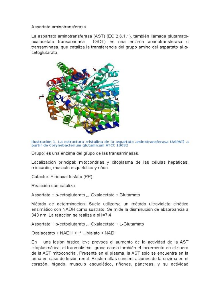 aspartato aminotransferasa español
