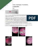Resumo de lâminas histologia- 3° bimestre