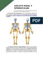 Esqueleto Axial y Apendicular 2